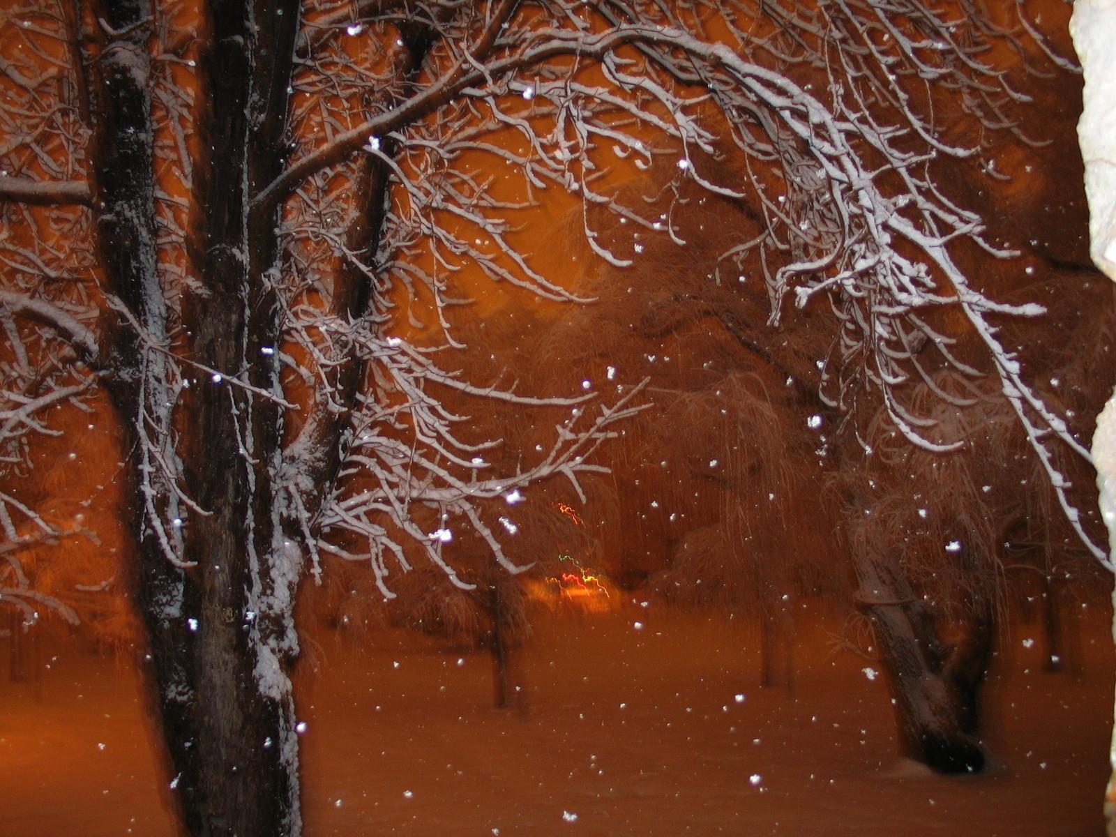 snow-trees-2-1489678-1600x1200